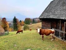 Lantgård i Sohodol i det Brasov länet i Rumänien royaltyfria bilder
