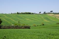 Lantgård med gräsplanfält i Tuscany, Italien Arkivbild