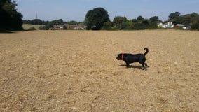 Lantgård med hunden Arkivfoto