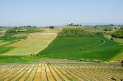 Lantgård med vingårdar och fält i Tuscany, Italien Fotografering för Bildbyråer