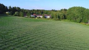 Lantgård och fält av mognande vete Sydlig Finland flyg- granskning arkivfilmer