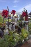 Lantgård- och trädgårdbarnkammare i Canby Oregon Royaltyfria Foton