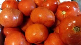 Lantgård valda tomater Royaltyfri Bild