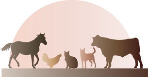 Lantgårddjur Arkivfoto