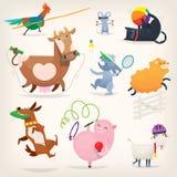 Lantgårddjur som gör sportar Arkivbild