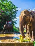 Lantgården av elefanter inte långt från Dalat vietnam Royaltyfri Fotografi