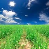 lantgården för sockerrottingen med ljust skyggar plentifully & solen Royaltyfri Foto
