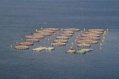 Lantgården för växande skaldjur albacoren royaltyfri bild