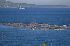 Lantgården för växande skaldjur albacoren arkivbilder