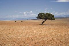 lantgården fields den lone treen royaltyfri foto