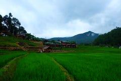 Lantgården i Thailand royaltyfria bilder