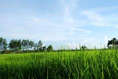 Lantgården i Thailand arkivbild