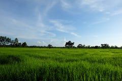Lantgården i Thailand arkivfoto