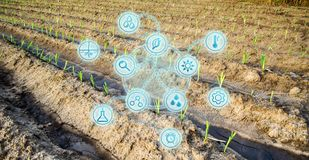 Lantgårdfält av ung kål unga plantor Innovationer och nya tekniker i den jordbruks- affären Vetenskapliga developmen arkivfoto