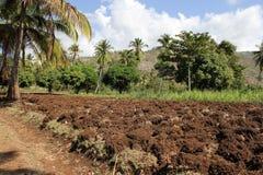 Lantgårdfält i Jacmel, Haiti Arkivfoto