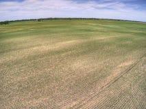 Lantgårdfält i lantliga North Dakota, Amerikas förenta stater royaltyfri bild