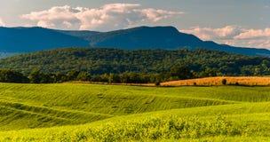 Lantgårdfält och sikt av det Massanutten berget i Shenandoahen V royaltyfria foton