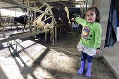 Lantgårdflicka i kon som mjölkar lättheten arkivfoton