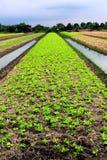 lantgårdgrönsak Royaltyfria Bilder