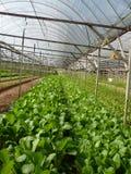 lantgårdgrönsak Arkivbilder