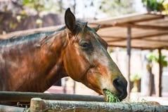 lantgårdhäst i stallen royaltyfri fotografi