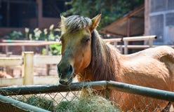 lantgårdhäst i stallen royaltyfria foton