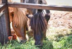 lantgårdhäst i stallen royaltyfria bilder