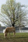 lantgårdhäst kentucky arkivfoto