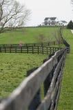 lantgårdhäst kentucky Arkivbild