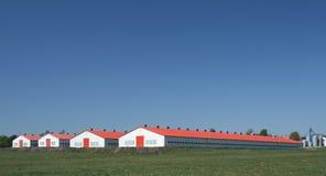 lantgårdhöna Arkivbild