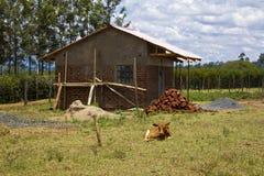 Lantgårdhus Arkivfoto