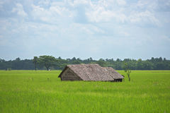 Lantgårdhus bland risfält i Myanmar Arkivbild
