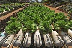 lantgårdhydroponicsgrönsaker Arkivfoto