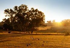 lantgårdliggandesolnedgång Arkivbild