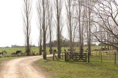 Lantgårdträd och staket royaltyfria bilder