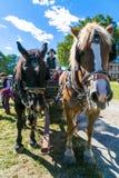 Lantgårdvagnhästar på den Landis dalen Arkivfoton