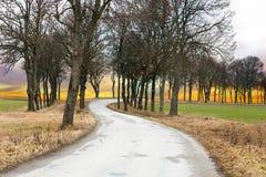 lantlig aveny Fotografering för Bildbyråer