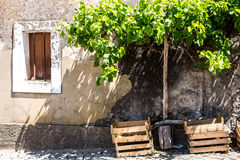Lantlig byggnad med druvavinrankor, Portugal Royaltyfria Foton
