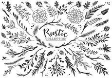 Lantlig dekorativ växt- och blommasamling tecknad hand Arkivfoton
