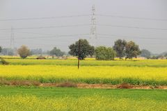 Lantlig elektrifiering i Uttar Pradesh, Indien Arkivfoton