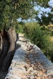 Lantlig gammal stenvägg Arkivfoto