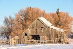 Lantlig gammal wood ladugård i vintern arkivfoton