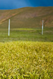 lantlig gräs- liggande royaltyfri foto