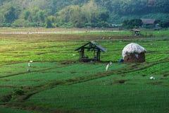 Lantlig grönsaklantgård av Thailand Fotografering för Bildbyråer