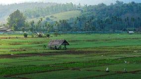 Lantlig grönsaklantgård av Thailand Royaltyfria Bilder