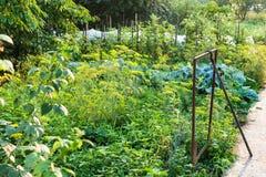 Lantlig grönsakträdgård efter regn i sommar Arkivbilder