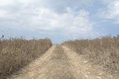 Lantlig grusvägblytak till och med torr grässlätt mot blå himmel Royaltyfri Fotografi