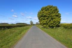 Lantlig huvudväg i vår Arkivfoton