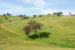 Lantlig jordbruksmark, sydliga New South Wales, Australien Royaltyfri Fotografi