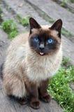 lantlig katt Arkivbilder
